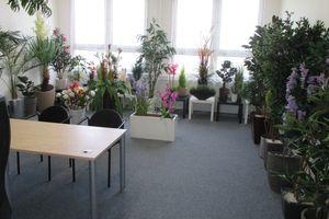 StudioGreen.cz - Umělé rostliny jako živé